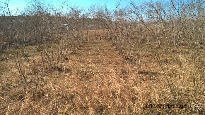 For sale plot of land in Zugdidi