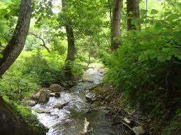 For the most beautiful in the Borjomi valley (village Likani)