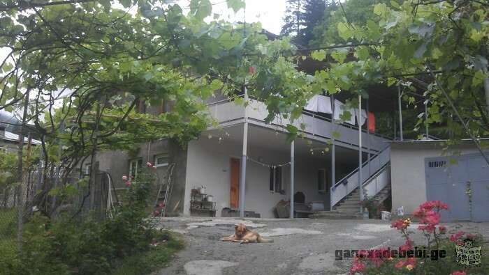 House for rent in Borjomi, Likani forest edge.