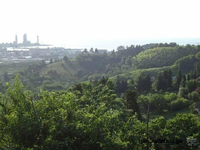 Land near Batumi, view of the city and the sea