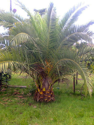 Palm trees and evergreen plants cheaply