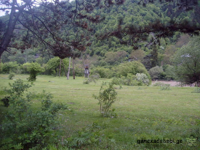 The plot with perspective position in borjomi