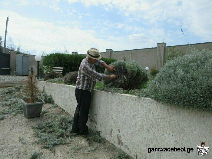ბაღების გაშენება და მოვლის სამუშაოები