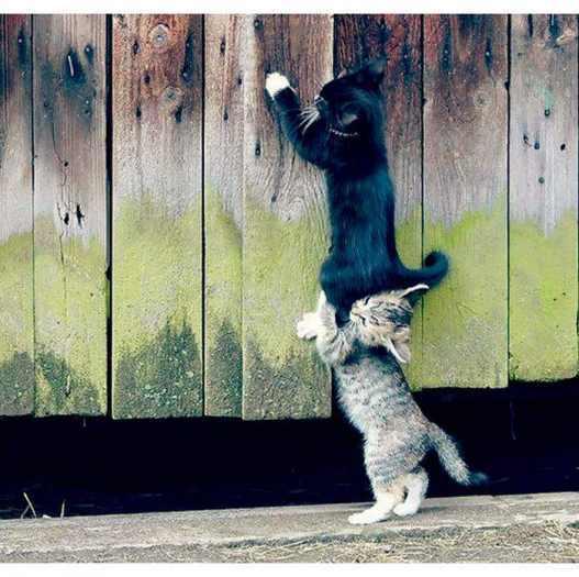 ვიჩუქებ კნუტებს ოღონდ მამალს