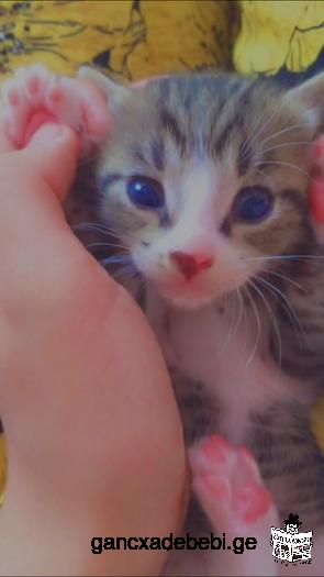 კნუტები