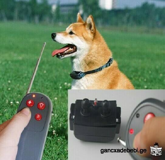 ძაღლის ელექტრო საყელური