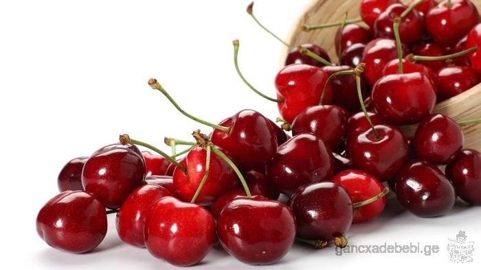 Cherry Salon