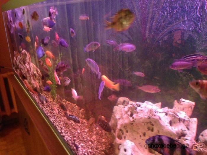 ikideba akvariumi