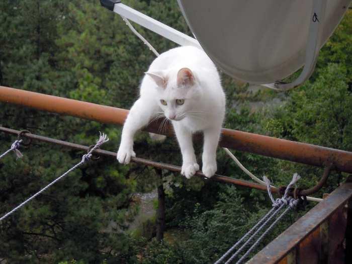 Белая кошка (бесплатно)