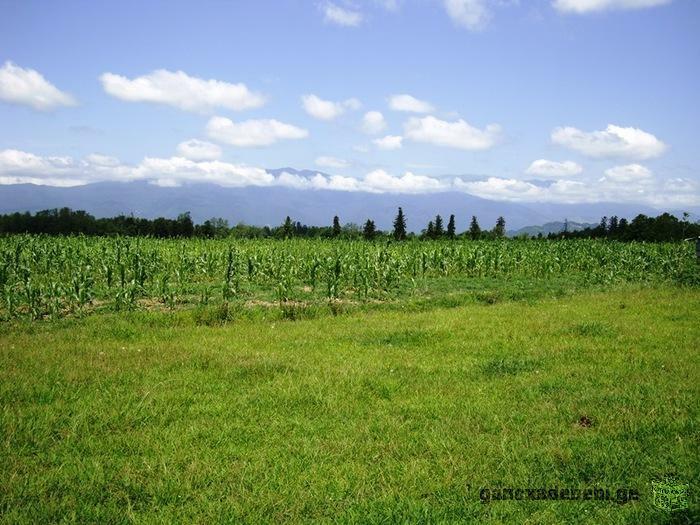 Продается 15,5 Гектар (155 000 кв.м) земли сельскохозяйственного назначения.
